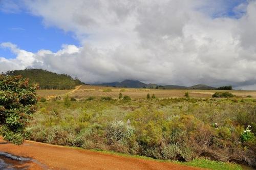 Vinícola em Stellenbosch
