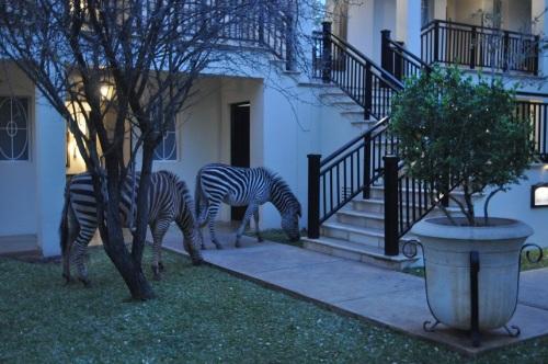 Zebras na escada